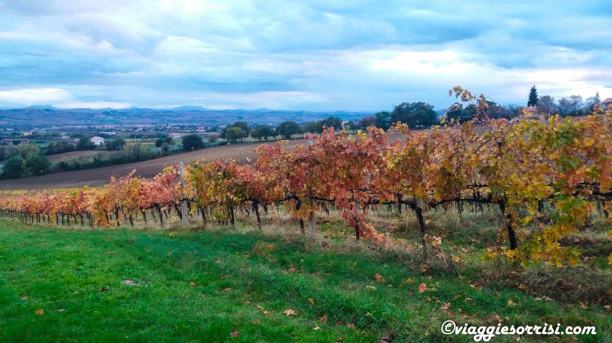 Il profumo del vino nuovo. Cantina Capinera di Morrovalle